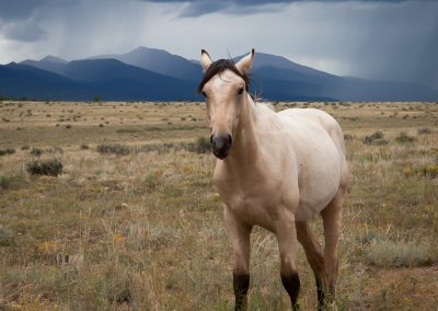 KLZR_Beautiful_Custer_County_Horse_mtns-