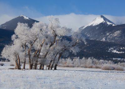 KLZR_Beautiful_Custer_County_hoar_frost_cottonwoods-8948